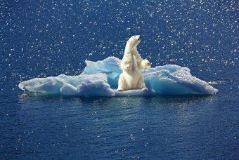 Riscaldamento globale in aumento: i veri pericoli per l'uomo sono lo scetticismo e il negazionismo