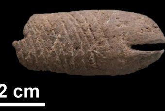 Sapore di sale: scoperta la più antica evidenza di salatura del pesce nel sito preistorico di Al Khiday in Sudan risalente a 10.000 anni fa