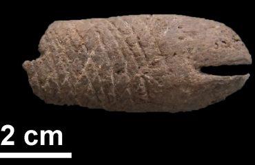 Elemento decorativo a forma di pesce di epoca Mesolitica rinvenuto durante lo scavo di Al Khiday