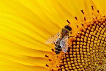 La scomparsa delle api e l'orologio dell'apocalisse
