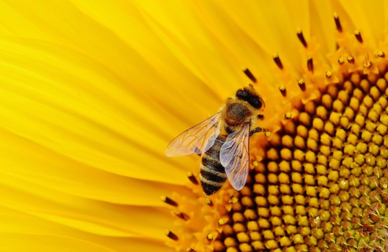 sun-flower-1643794_1920.jpg