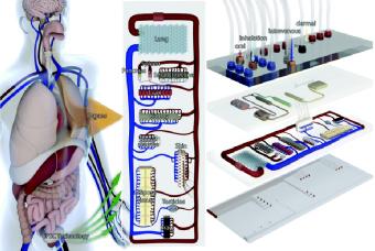 Organi-chip per testare i farmaci e ridurre la sperimentazione animale