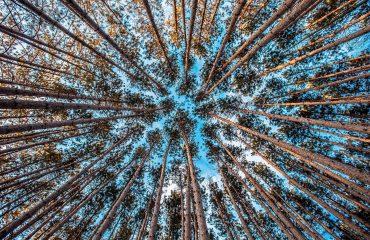 Tutela dell'ambiente a livello internazionale: cosa è importante sapere