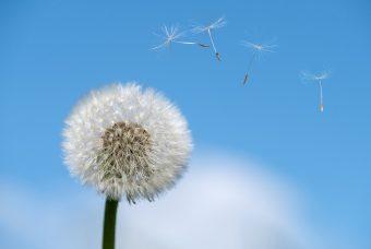 "Nasce ""Stop Allergia"":nuova rivista dedicata alle allergie"