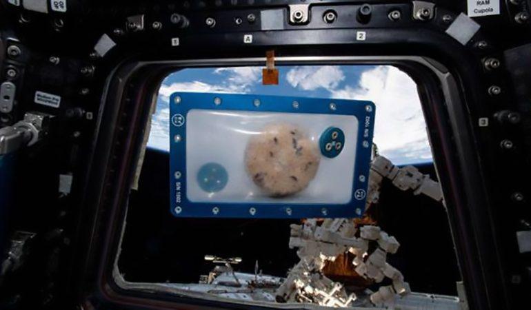 Biscotto con vista sulla Terra