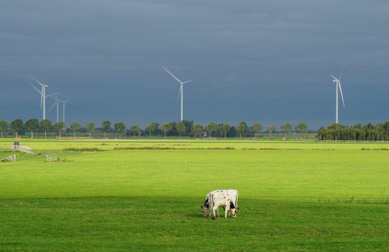 Foto di copertina di Carolien van Oijen da UnSplash